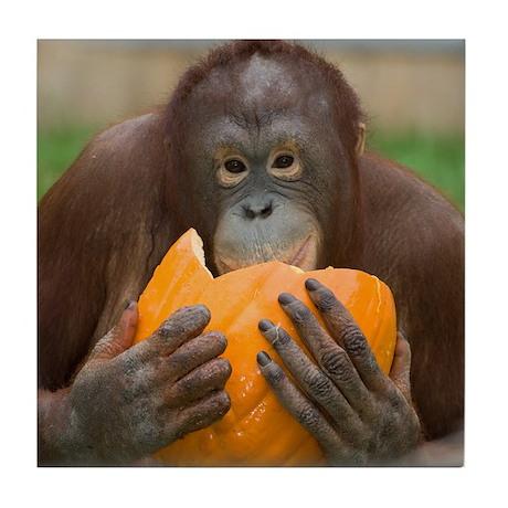 Orangutan with Pumpkin Tile Coaster