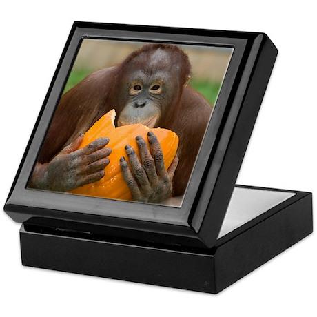 Orangutan with Pumpkin Keepsake Box