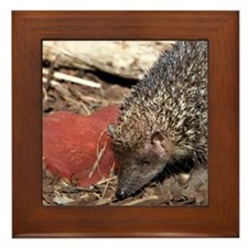 Hedgehog Heart Framed Tile