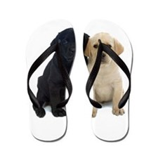 Black and White Labrador Puppies. Flip Flops