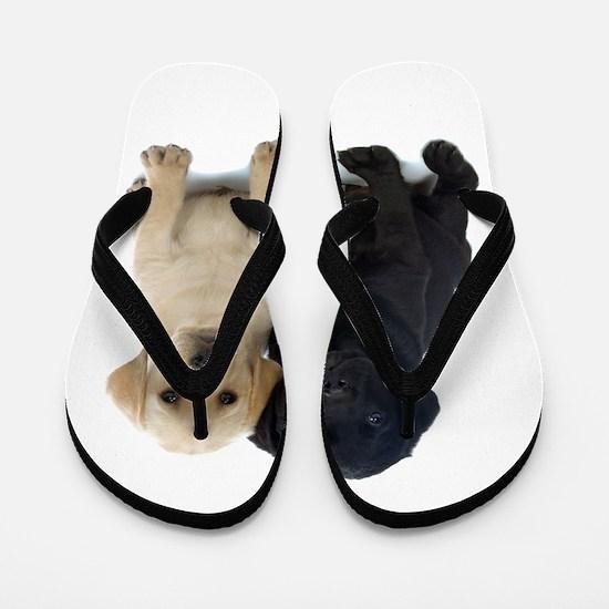 Black and White Labrador Puppies. Flip Flops