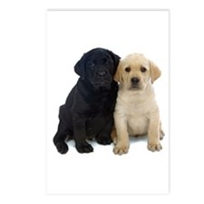 Black and White Labrador Puppies. Postcards (Packa