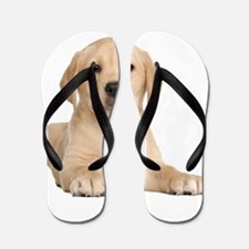 Golden Lab Flip Flops