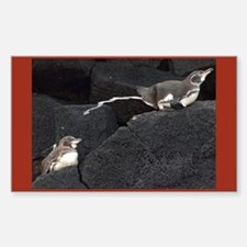 Galapagos Penguins in Action Rectangle Decal