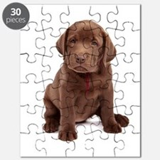 Chocolate Labrador Puppy. Puzzle