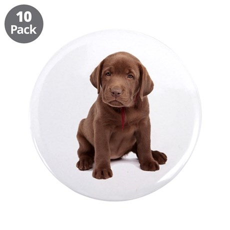 "Chocolate Labrador Puppy. 3.5"" Button (10 pack)"
