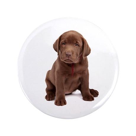 "Chocolate Labrador Puppy. 3.5"" Button (100 pack)"
