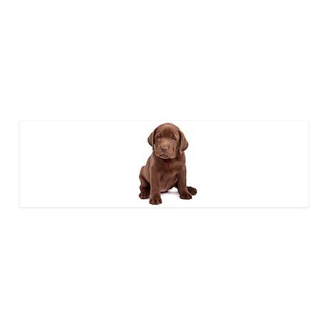 Chocolate Labrador Puppy. 36x11 Wall Decal