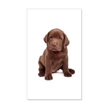 Chocolate Labrador Puppy. 35x21 Wall Decal