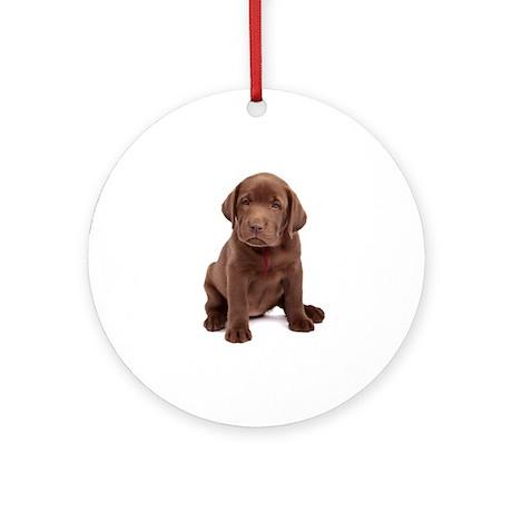 Chocolate Labrador Puppy. Ornament (Round)