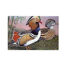 Rectangle Magnet of Mandarin Ducks.