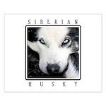 Husky Eyes Small Poster