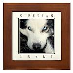 Husky Eyes Framed Tile