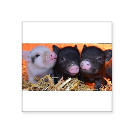 """3 little micro pigs Square Sticker 3"""" x 3"""""""