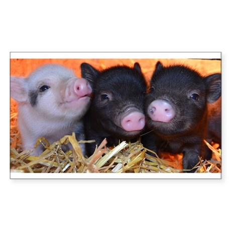 3 little micro pigs Sticker (Rectangle)
