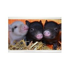 3 little micro pigs Rectangle Magnet