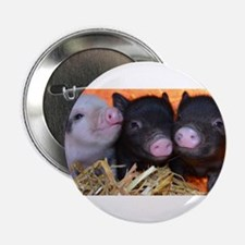 "3 little micro pigs 2.25"" Button"