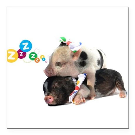 "micro pigs sleeping Square Car Magnet 3"" x 3"""