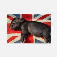 Micro pig sleeping on Union cushion Rectangle Magn