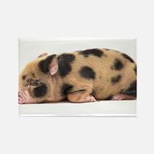 Micro pig sleeping Rectangle Magnet