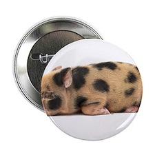 "Micro pig sleeping 2.25"" Button"