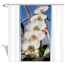 White orchids! Lovely Photo! Shower Curtain