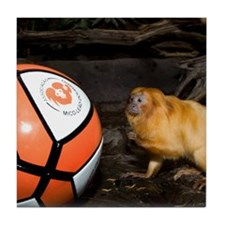 Golden Lion Tamarin with Volleyball Tile Coaster