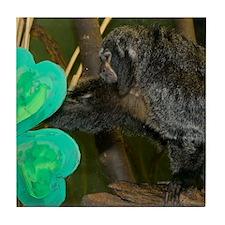 Monkey Grabbing Shamrock Tile Coaster