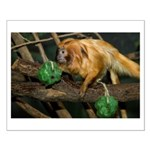 Golden Lion Tamarin with Shamrock Small Poster