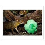 Agouti With Shamrock Small Poster