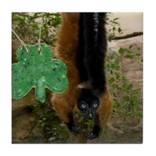Red Ruffed Lemur with Shamrock Tile Coaster