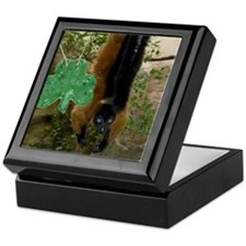 Red Ruffed Lemur with Shamrock Keepsake Box