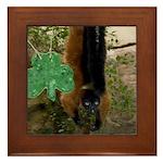 Red Ruffed Lemur with Shamrock Framed Tile