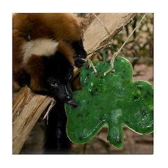 Red Ruffed Lemur Eating Shamrock Tile Coaster