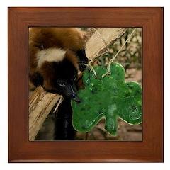 Red Ruffed Lemur Eating Shamrock Framed Tile