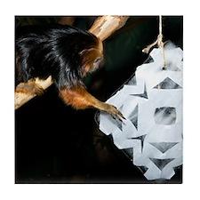 Golden Headed Lion Tamarin Grabbing Snowflake Tile