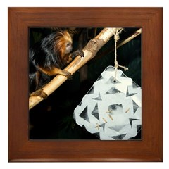 Golden Headed Lion Tamarin With Snowflake Framed T