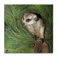 Meerkat In Wreath Tile Coaster