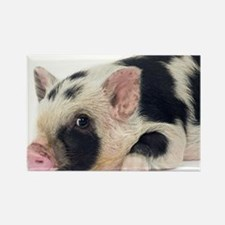 Micro pig chilling out Rectangle Magnet