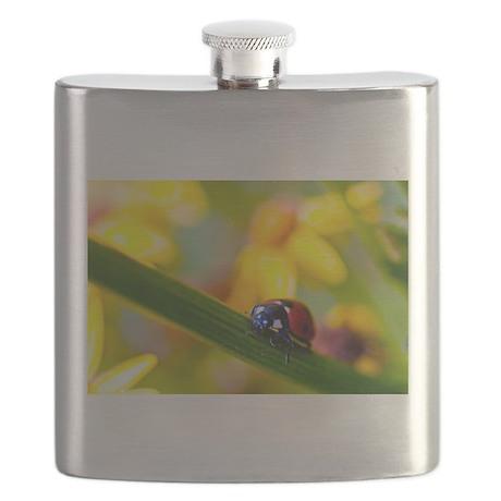Ladybird on Ragwort flowers Flask