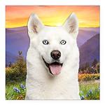 White Husky Meadow Square Car Magnet 3
