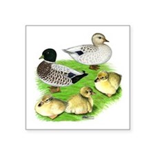 "Snowy Call Duck Family Square Sticker 3"" x 3&"