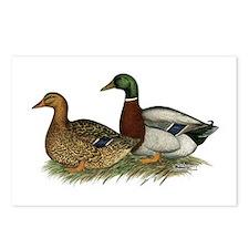 Rouen Ducks Postcards (Package of 8)