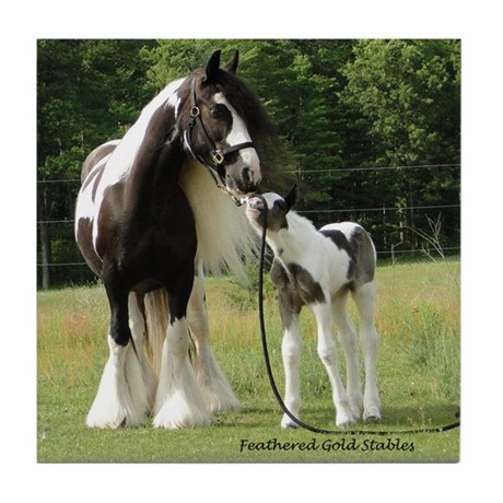Gypsy Foal Series - Tile Coaster #8