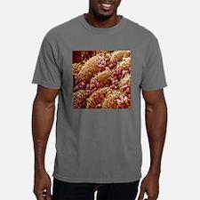 Intestinal bacteria, SEM Mens Comfort Colors Shirt