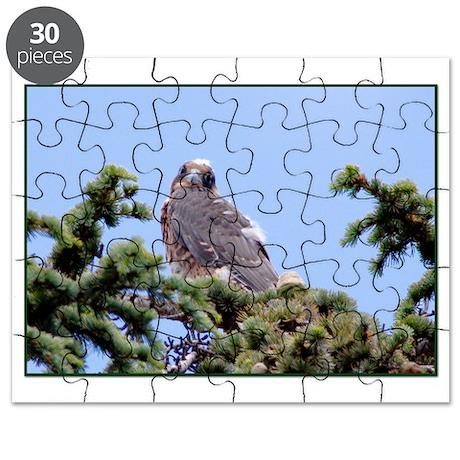Fledgling Falcon in a Pine Tree Puzzle
