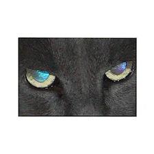 Unique Cat w/ Cool Eyes Rectangle Magnet (10 pack)
