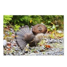 Ruffed Grouse Postcards (Package of 8)