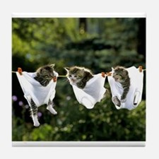 hanging around kittens Tile Coaster