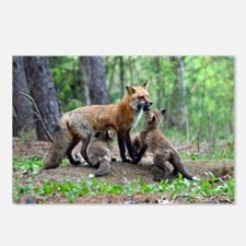 Red Fox family Postcards (Package of 8)